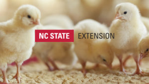Chicks with NC State Extension logo