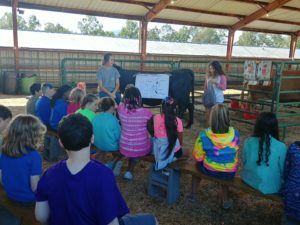 Youth learning about cattle