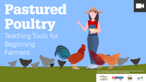 Pastured Poultry series featured graphic