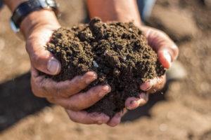 Cover photo for Consumer Soil Samples