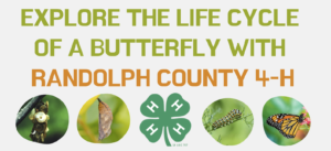 Explore The Life Cycle Of A Butterfly