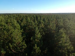 Overhead shot of NC forest