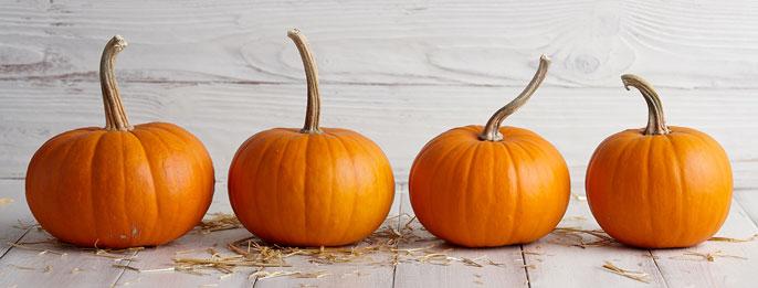 Neat row of 4 pumpkins
