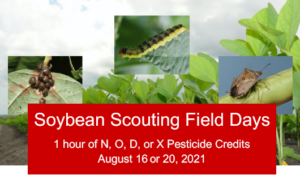 Soybean Field Days