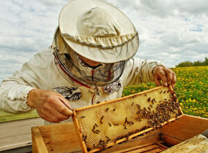 Cover photo for Beekeepers Series Begins in January
